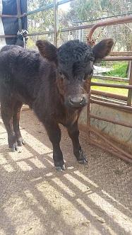 Turn bull